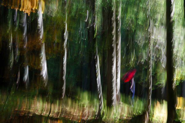Chartreuse, Alpes, Ombrelle rouge, lisière de sous-bois, forêt mystère de Chartreuse