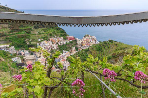 Cinque Terre, Italia, Liguria, vignes de Manarola, crémaillère