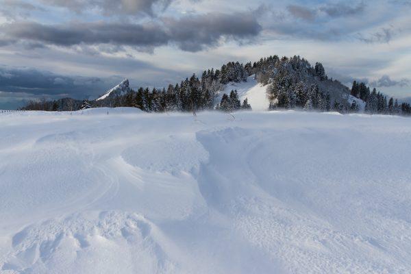 Chartreuse, Alpes, Isère, la Pinéa depuis la route du Charmant Som