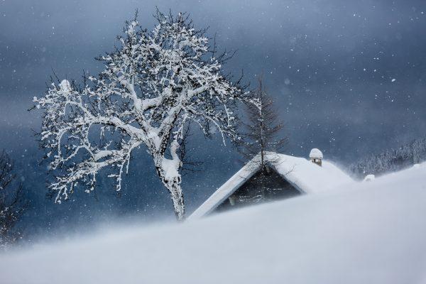 Chartreuse, Alpes, Isère, chalet sous la neige