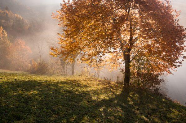 Alps, Isère, Chartreuse, arbre d'automne