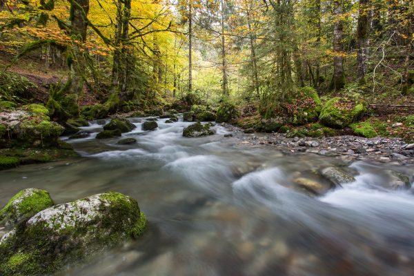 Alpes, Isère, Chartreuse, torrent du Guiers Mort