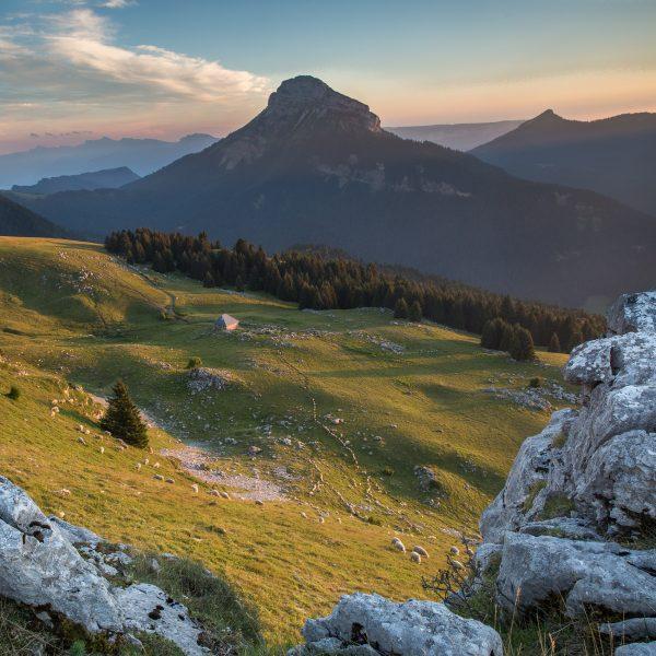 Alpes, Isère, Chartreuse, alpage de Pravouta