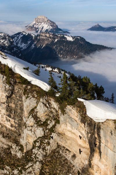 Alps, Isère, Chartreuse, Chamechaude depuis le Dôme de Bellefont