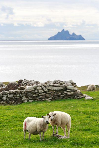 Irlande, Kerry, les Skellig Island depuis St Finan's Bay