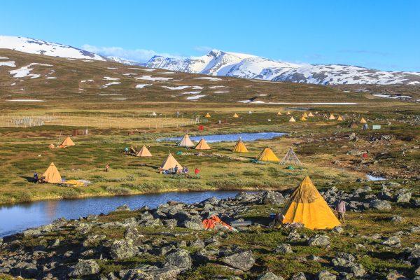 Suède, Padjelanta, Laponie, Sapmi, campement d'altitude pour le marquage des jeunes rennes
