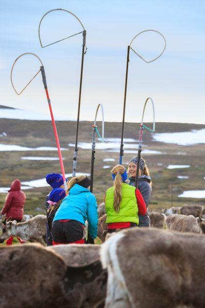 Suède, Padjelanta, Laponie, Sapmi, jeunes filles sames pendant le marquage des jeunes rennes