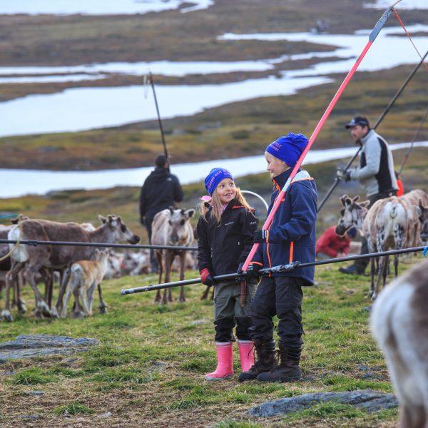 Suède, Padjelanta, Laponie, Sapmi, enfants sames marquage des jeunes rennes
