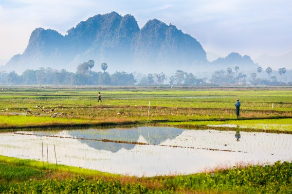 Myanmar, Birmanie, Hpa-an, rizières, rice fields