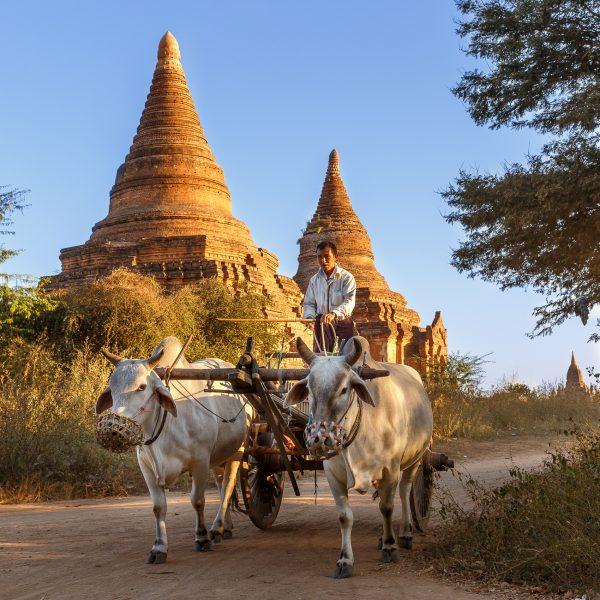 Myanmar, Birmanie, Bagan, le charretier (1)
