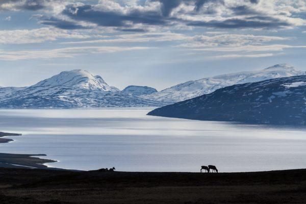 Voyage photo laponie, Suède, Padjelanta, padjelantaleden, rennes devant Vastenjaure