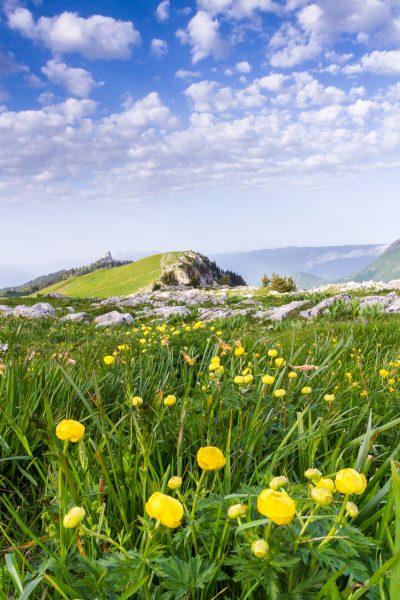 trolles sur l'alpage, Charmant Som, Chartreuse, Alpes