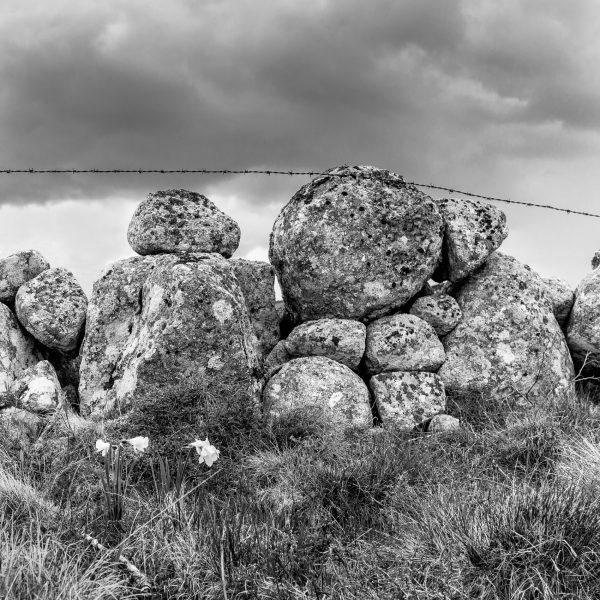 Aubrac, noir et blanc, paysage, muret, Lozère, Aveyron, Cantal
