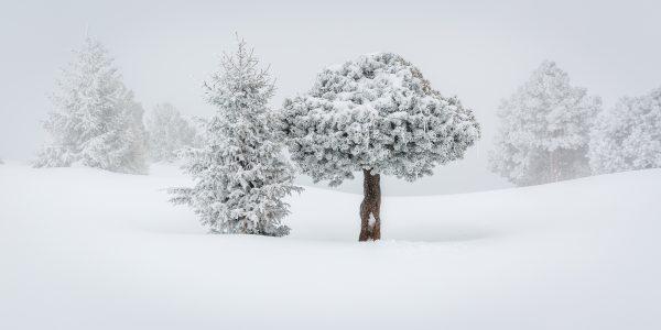 arbre, réserve naturelle, Savoie, Isère, neige, hiver, Chartreuse,