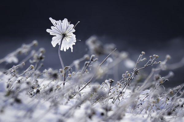 fleur de givre, Savoie, neige, hiver, STAGE PHOTO EN Chartreuse,