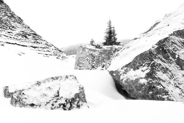 arbre, Isère, stage photo paysages de montagne en hiver, réserve naturelle des hauts-plateaux de Chartreuse