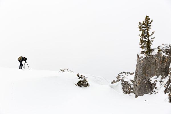 stage photo, arbre, Isère, neige, hiver, Chartreuse, hauts-plateaux, réserve naturelle