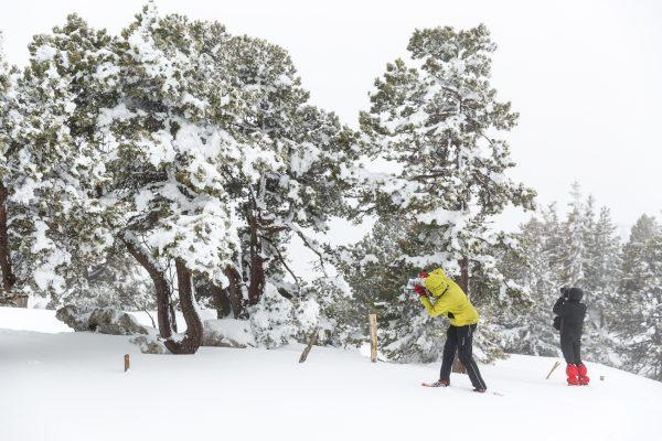 stage photo, Isère, neige, hiver, Chartreuse, hauts-plateaux, réserve naturelle