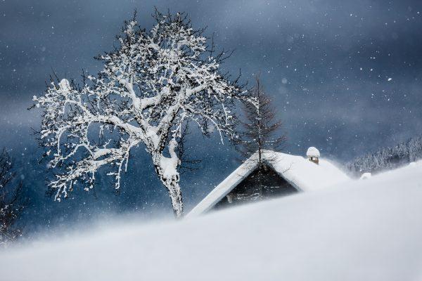 arbre et chalet, Savoie, neige, hiver, Chartreuse,