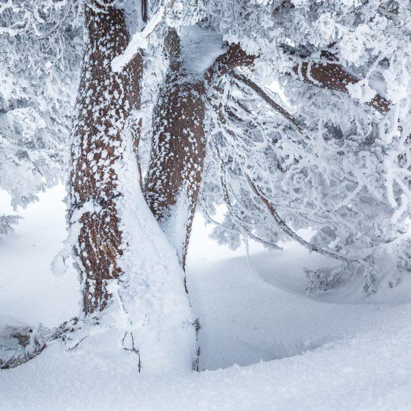 arbre gelé en hiver sur les hauts plateaux de Chartreuse, Isère. Stage photo Chartreuse