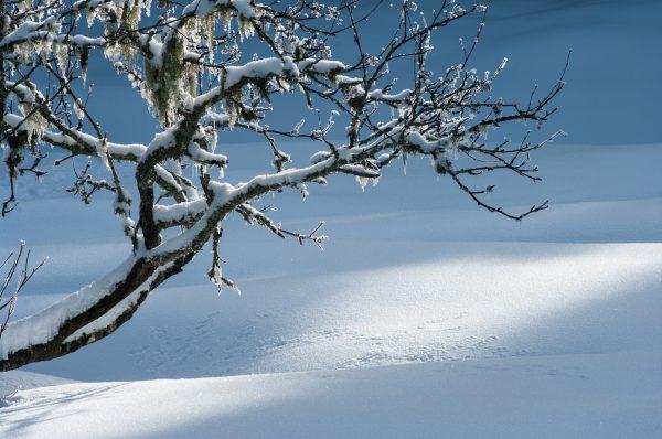 arbre hiver en Chartreuse, Isère, Savoie, photo de paysage d'hiver en montagne
