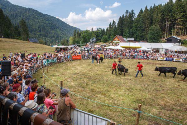 stage photo reportage fête des Hérens Chartreuse, Isère, Savoie