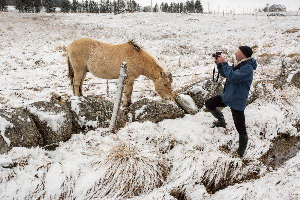 Rencontre en Aubrac, le chaval en Aubrac, stage photo l'hiver en Aubrac