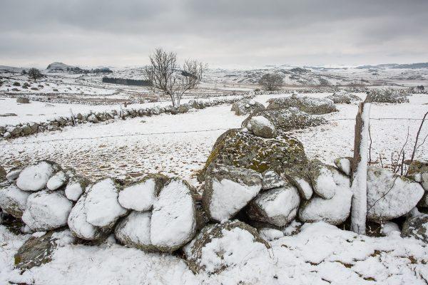 Muret d'Aubrac en hiver, stage photo en Aubrac
