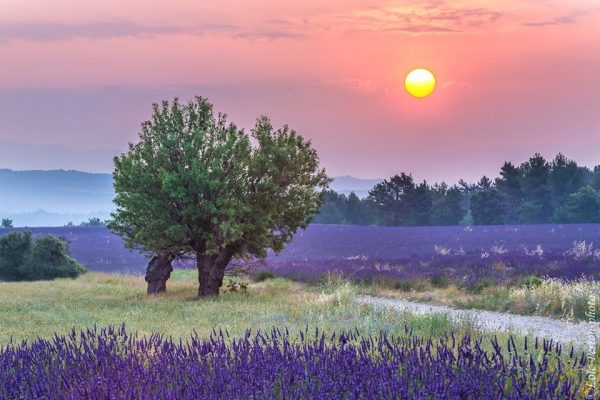 lever de soleil sur un champ de lavandes, Provence