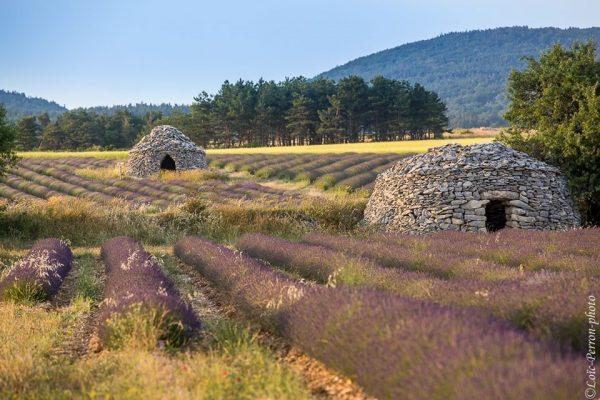 bories dans un champ de lavandes en Provence