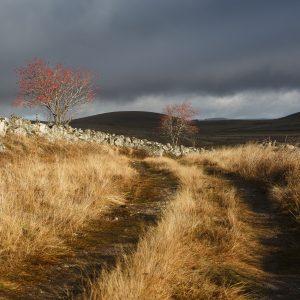 chemin d'automne, couleurs d'automne en Aubrac
