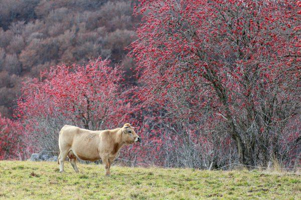 couleurs d'automne en Aubrac pendant un stage photo en Aubrac