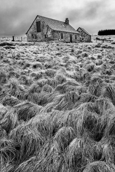 herbes folles et buron, à la manière de Jean-Loup Sieff