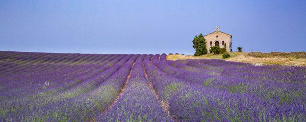 Chapelle et champ de lavande en fleur, Provence
