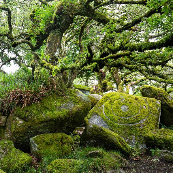 Wistman's wood, voyage photo Devon, parc national du Dartmoor
