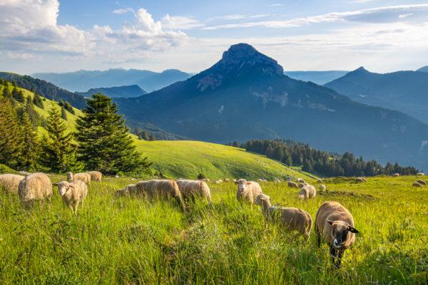 stage photo de paysage en Isère et Savoie