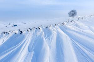 graphisme hivernal sur la neige en Aubrac